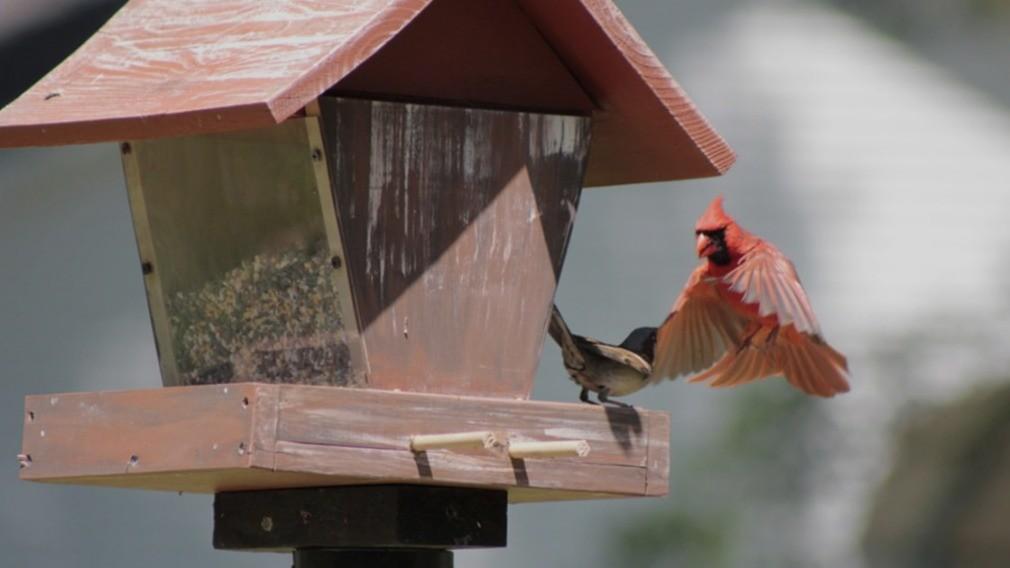 УО могут помочь птицам зимой и вдохновить жителей МКД творить добро