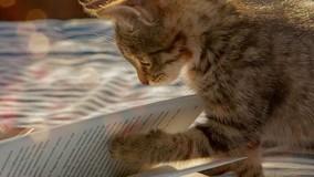 Хозяева животных должны соблюдать правила их содержания в МКД