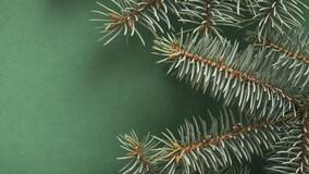 Начали работу пункты приёма новогодних ёлок: расскажите жителям МКД