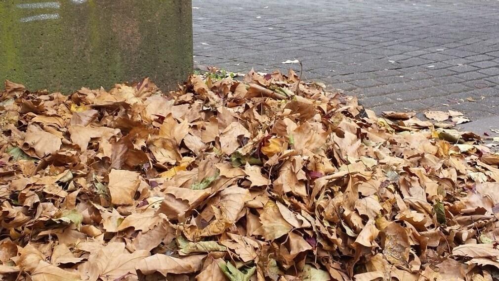 Входят ли уличный смёт и листья в состав ТКО: мнение эксперта