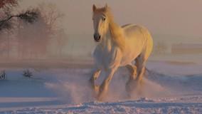 Мэр Томска призвал УО и ТСЖ приобрести снегоуборочную технику