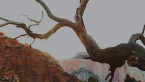 Дерево сутки пролежало на крыше МКД из-за спора УО с мэрией Ростова
