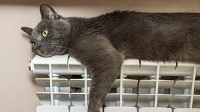 ОНФ измерит протяжённость изношенных надземных теплотрасс в котах