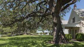 УО ответственна за состояние деревьев на придомовой территории МКД