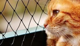 Минстрой РФ изменит Правила содержания МКД ради «котиков ЖКХ»