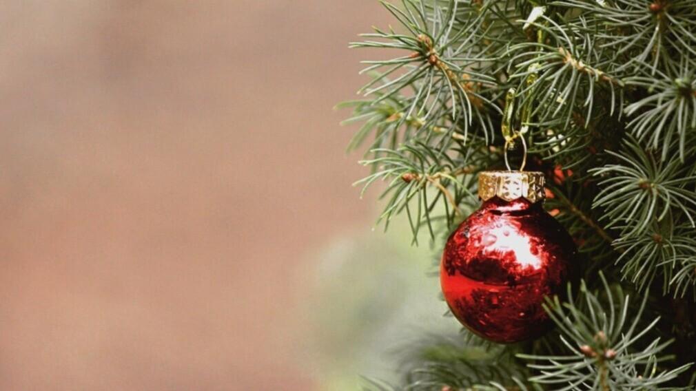 УО и ТСЖ регионов России участвуют в утилизации новогодних ёлок