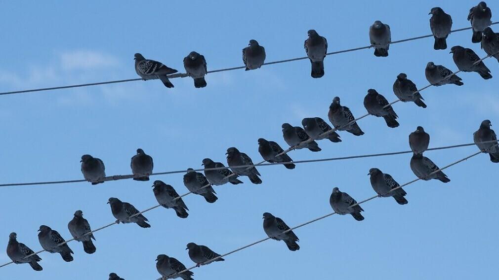 Как появляются бесхозяйные сети и кто отвечает за их эксплуатацию
