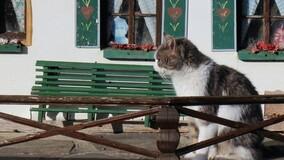 Житель МКД с согласия соседей устроил во дворе гостиницу для кошек