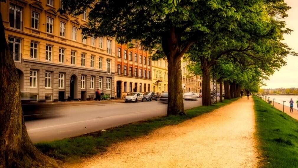 Жители дома и УО не могут сажать деревья во дворе без согласия ОСС
