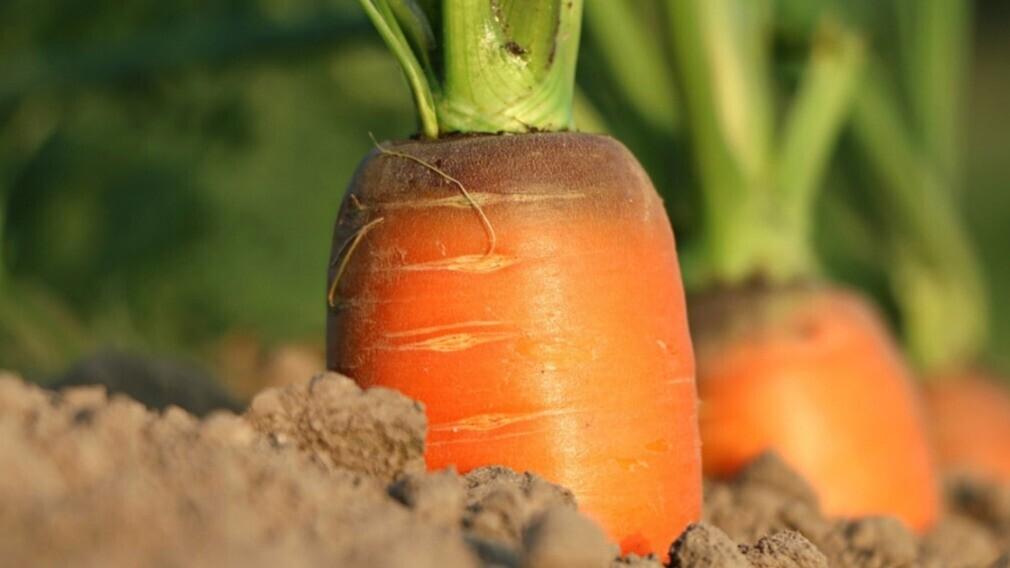 Эксперт разъяснил, можно ли разбить огород на придомовой территории