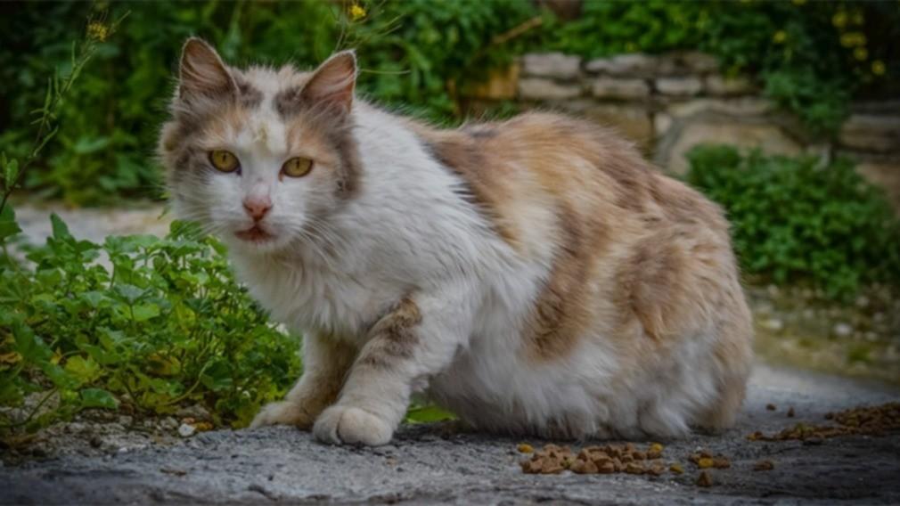 Минстрой РФ изменит нормы содержания имущества в МКД ради кошек