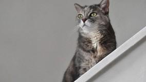 Правительство РФ обяжет УО оставлять в подвалах продухи для кошек