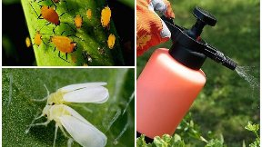 Защита растений